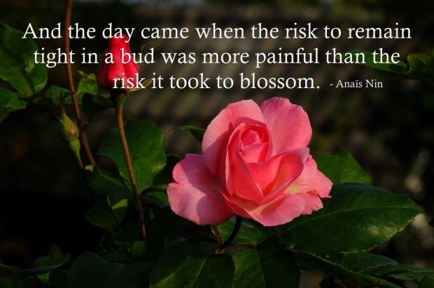 Quote_Nin_RiskBloom